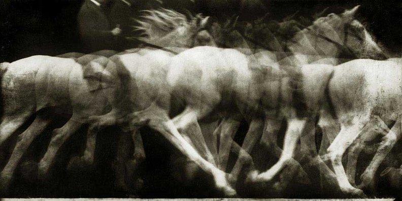 Étienne-Jules Marey, caballo blanco montado, 1886, locomoción del caballo, experimento 4, cronofotografía en placa fija, negativo.